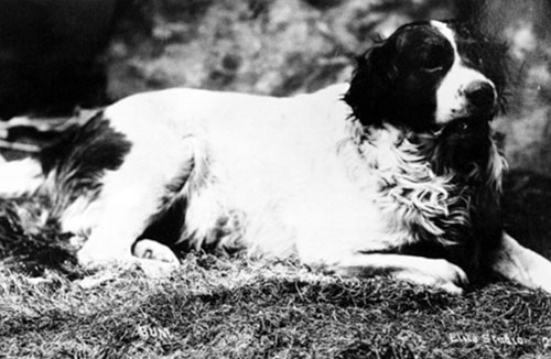 Bum, San Diego's Official Town Dog in 1887