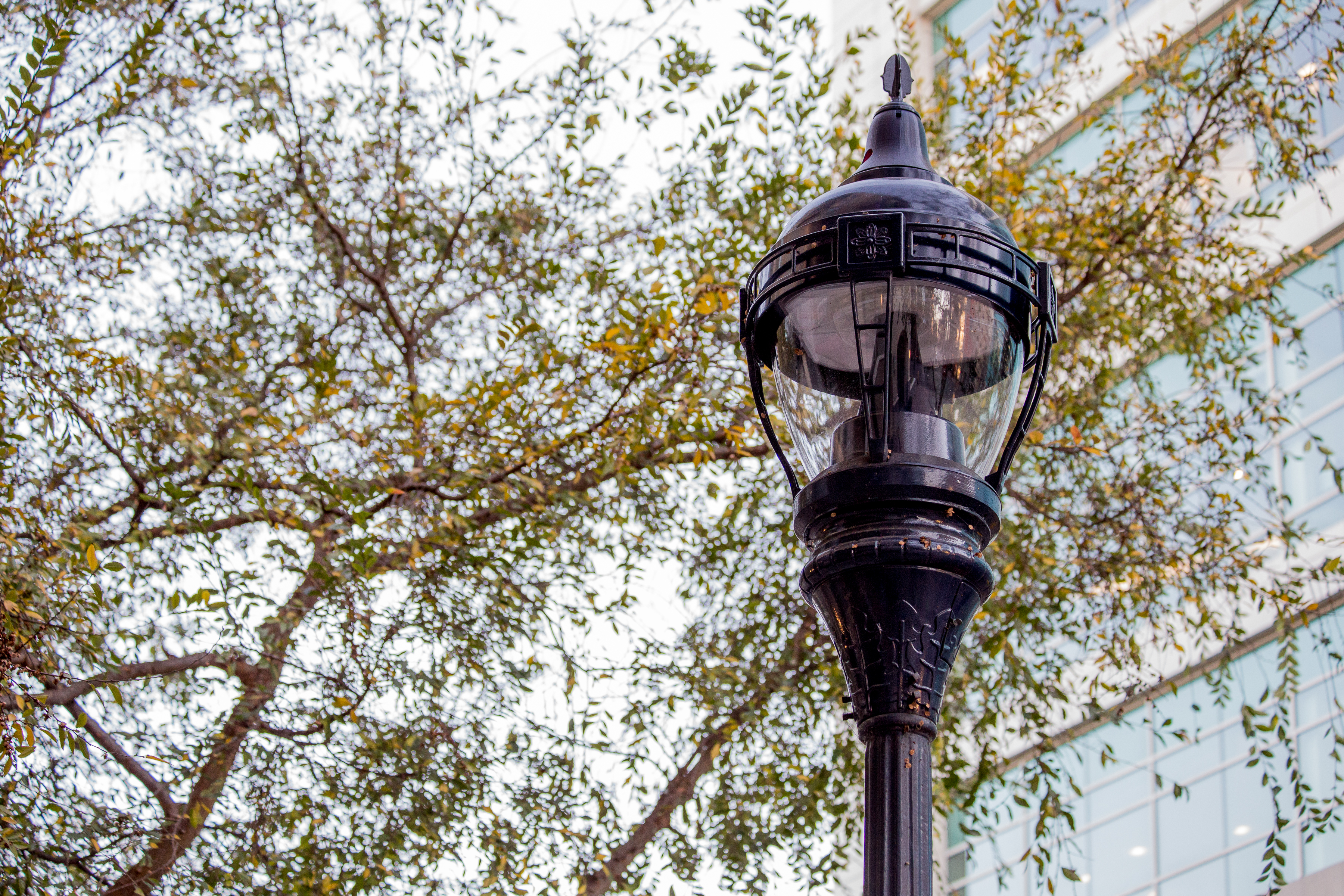 street light with building and tree in the background