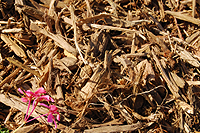 Photo of Natural Wood Chips