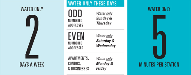 Graphic of watering guidelines