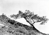 Photo of Torrey Pines