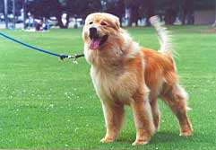 Photo of Cooper the Dog on a Leash