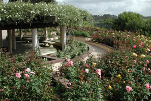 Photo Of The Rose Garden, 3 Of 4