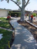 Photo of Solutions to Tree Problems - Don Way and Donald Ave