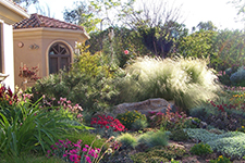 Photo of drought tolerant landscaping
