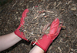 Photo of Mulch