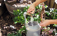 Photo of Watering Can Being Filled from Spigot