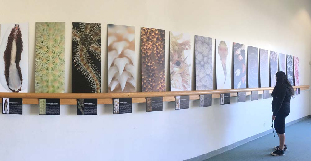 Installation view of Art Forms in Nature at the Rancho Peñasquitos Branch Library