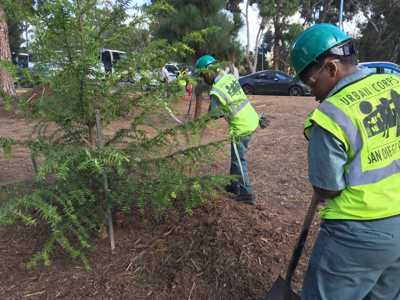Urban Corps planting trees in Balboa Park