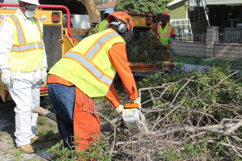 City crews cutting branches