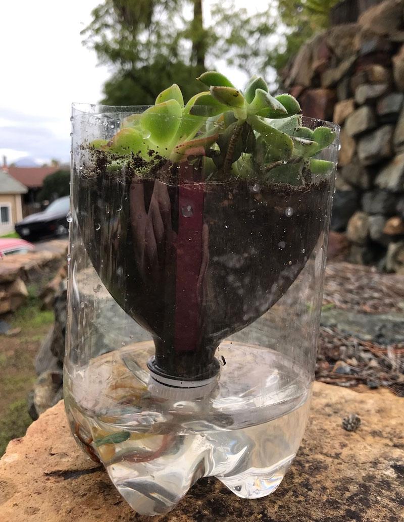 DIY Self-watering plant container