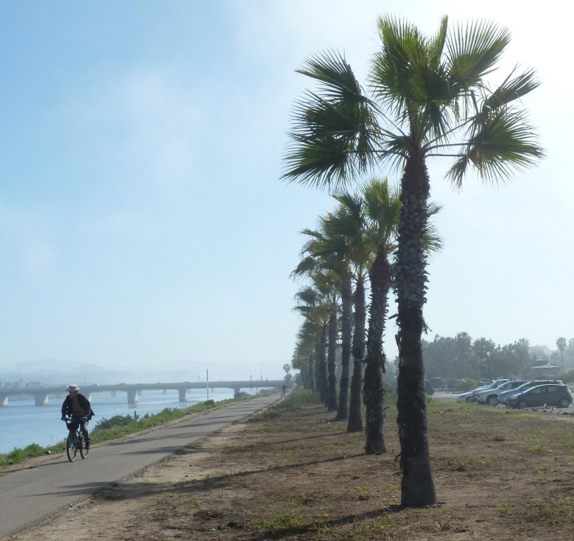 Bicyclist riding by palm trees at Robb Field