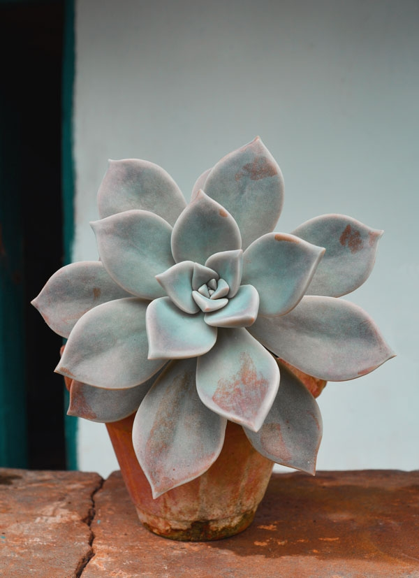 Photo of succulent plant in pot