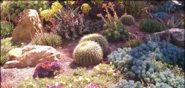 Photo of drought tolerant landscape.