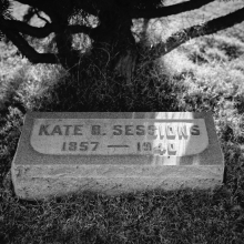 Tombstone of Kate Sessions, circa 1959